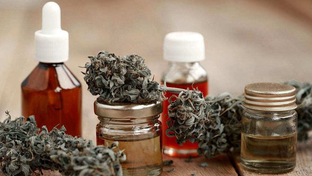 Quiénes y cómo se puede acceder al Programa de Cannabis para el cultivo controlado