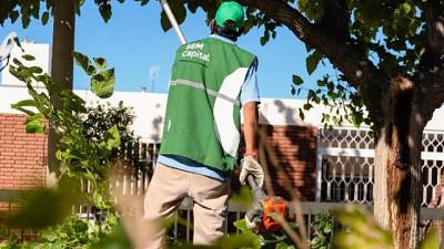 Vecinos de Capital ya pueden solicitar el permiso de poda a través de la web municipal